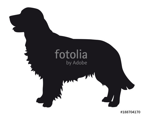 500x405 Golden Retriever