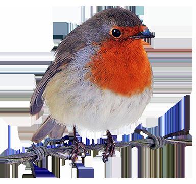 Robin Bird Silhouette At GetDrawings