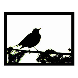 307x307 Robin Bird Silhouette Gifts Amp Gift Ideas Zazzle Uk