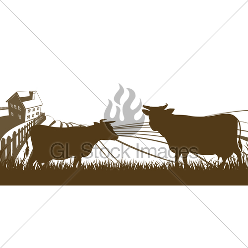 500x500 Cows And Farm Rolling Hills Landscape Gl Stock Images
