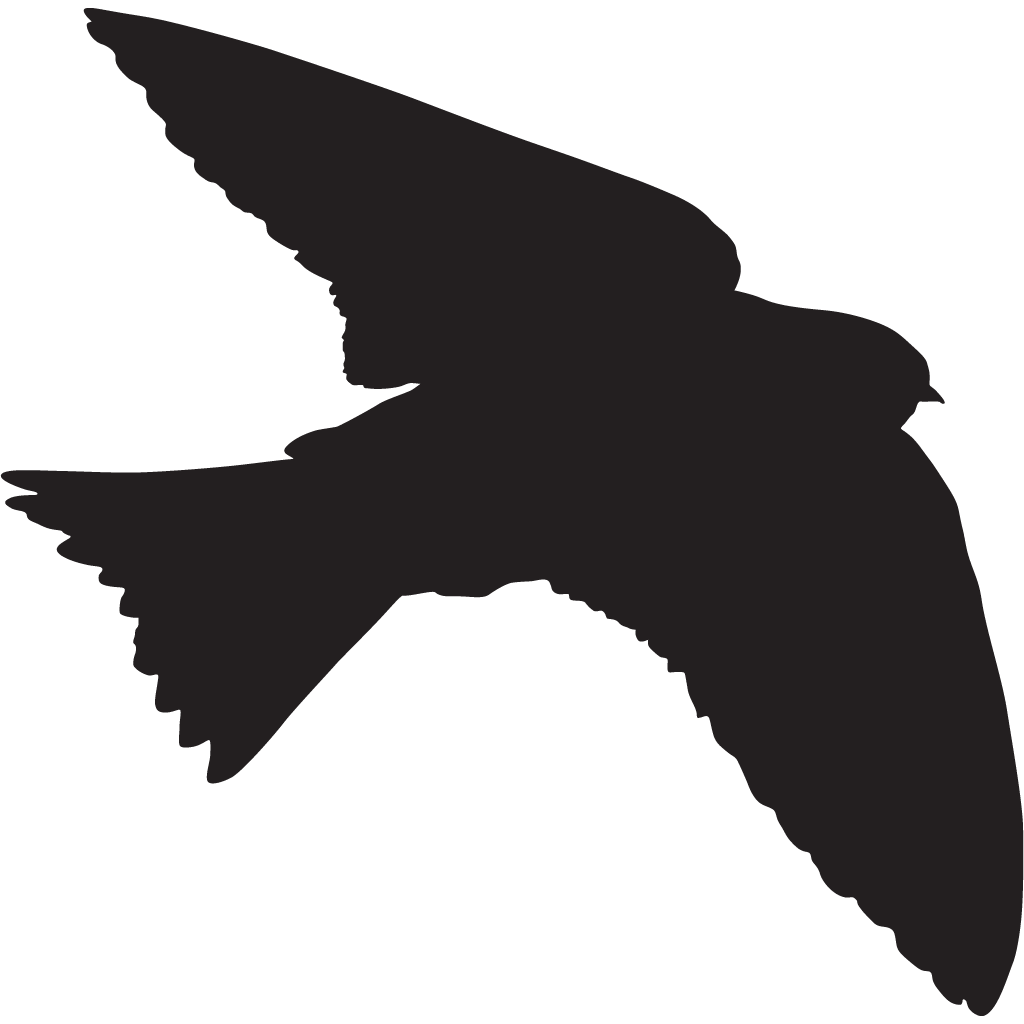 1024x1024 Purple Martin Overview, All About Birds, Cornell Lab Of Ornithology