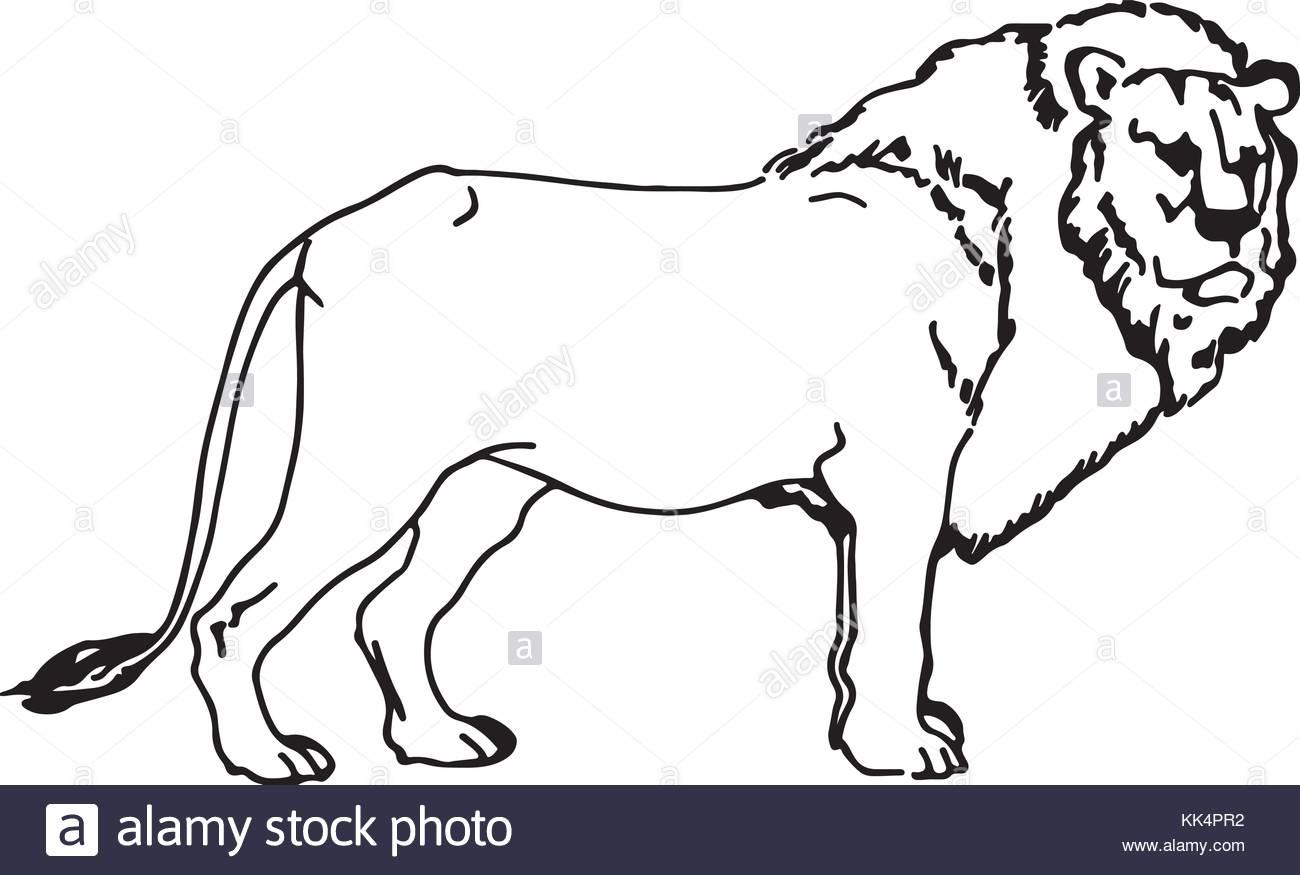 1300x875 Silhouette Lion Stock Photos Amp Silhouette Lion Stock Images