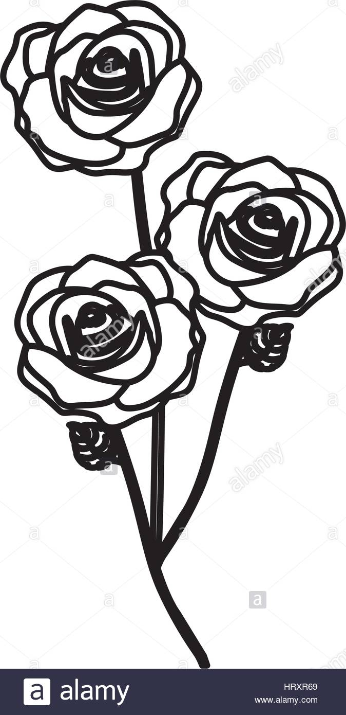 674x1390 Sketch Silhouette Bouquet Roses Floral Icon Stock Vector Art