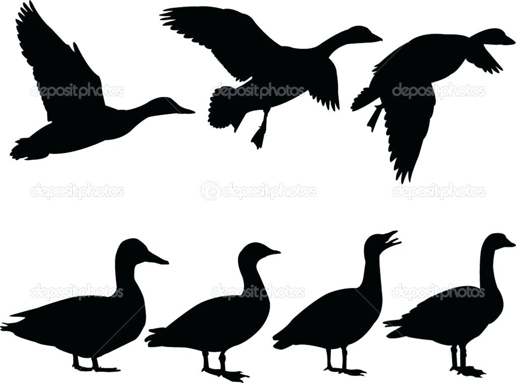 1023x759 Duck Silhouette Isolated On White Clip Art Vector Search Duck