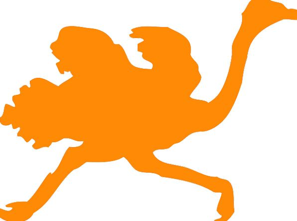 596x443 Ostrich, Carroty, Large Birds, Orange, Run, Track, Running, Fast