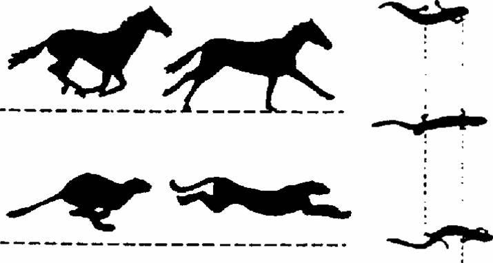 715x382 Why Study Horses Equine Biomechanics