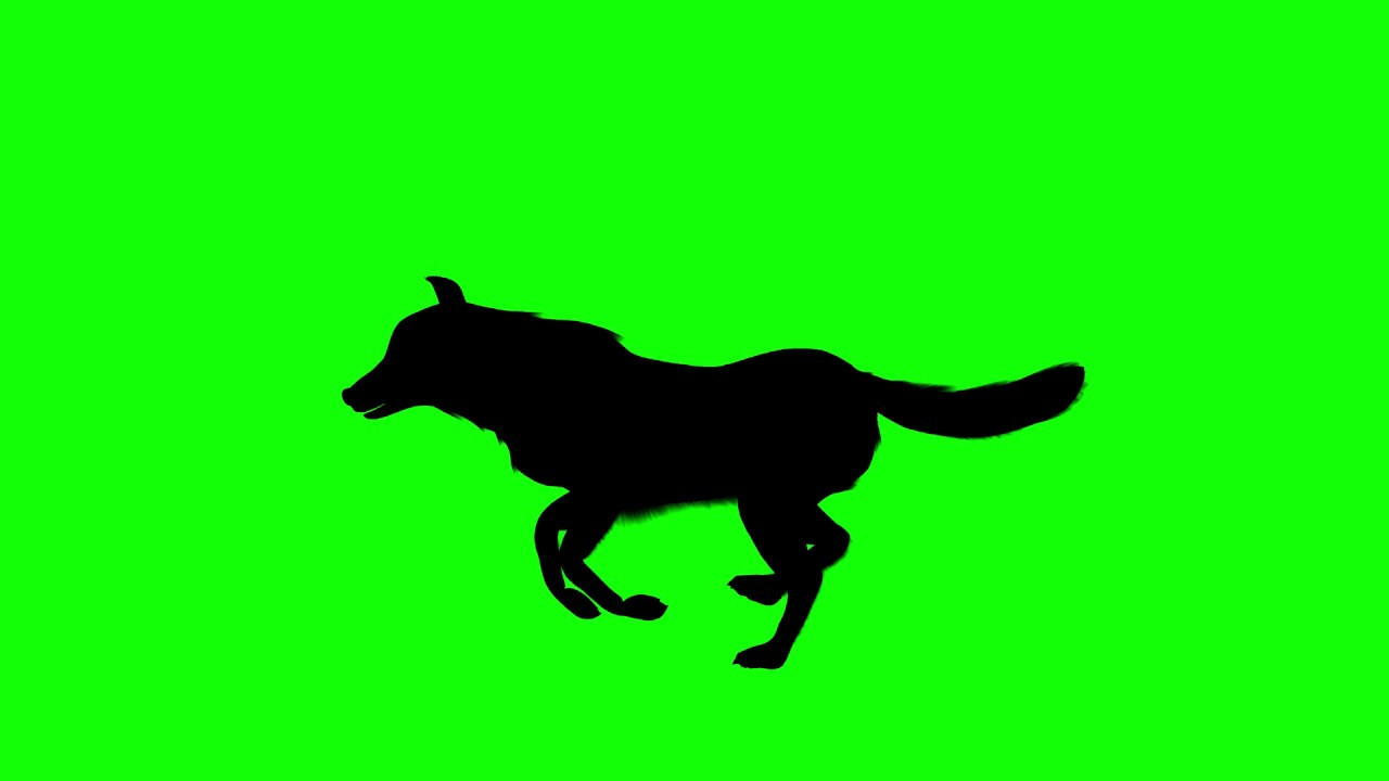1280x720 Free Hd Video Backgrounds Silhouettes Wolf Running