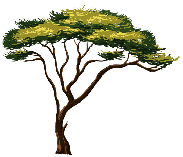 600x516 Painted African Tree Png Clipart Picture Trees