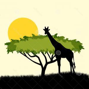 300x300 Stock Illustration Acacia Tree Giraffe Silhouette Concept Design