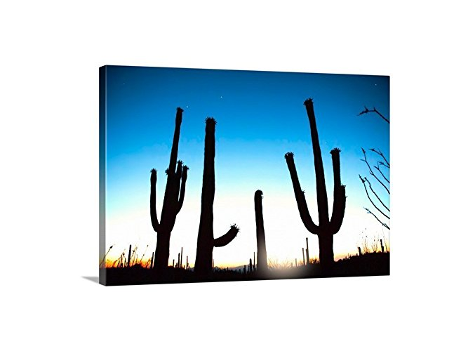 667x500 Cactus Print, Desert Photography, Arizona Desert