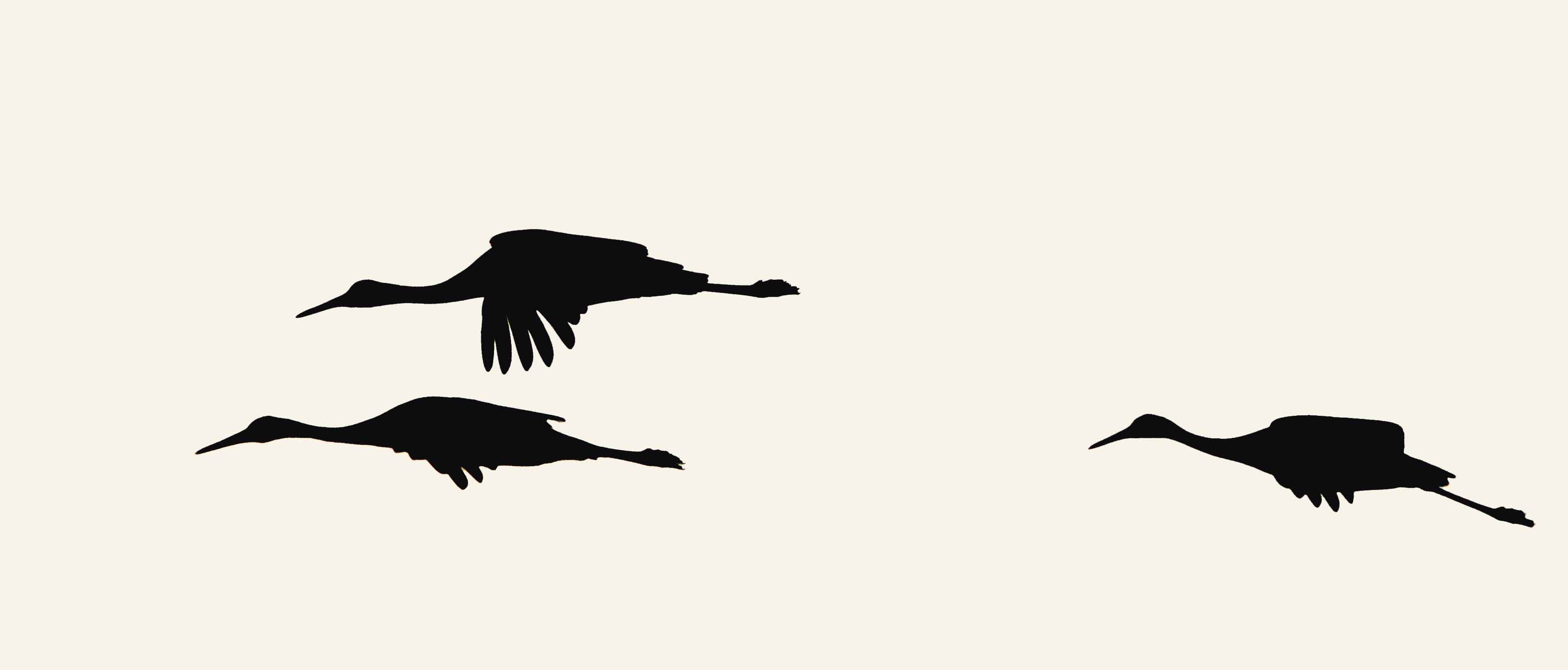 3555x1518 Photography Tip Sandhill Cranes Naturally Speaking