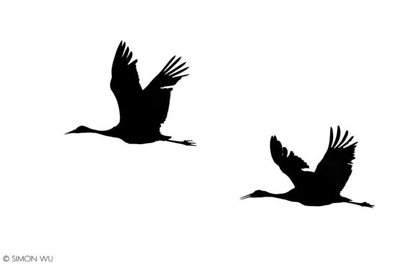 800x533 Sandhill Crane Silhouette Bosque Del Apache National