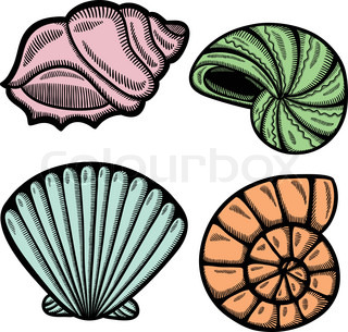 320x305 Sea Shell Vector Silhouette Stock Vector Colourbox