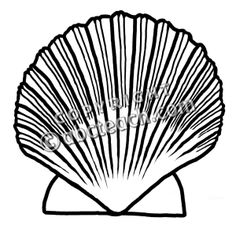 236x236 Scallop Shells Ornaments Scallop Shell Holiday Ornaments
