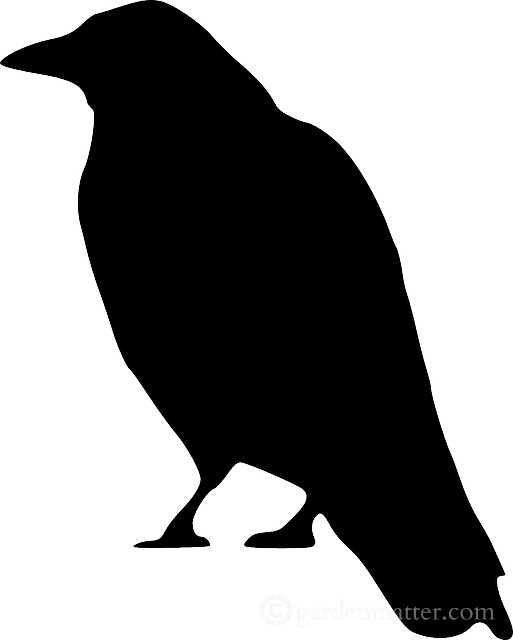 513x640 Scary Bird Silhouette For Halloween