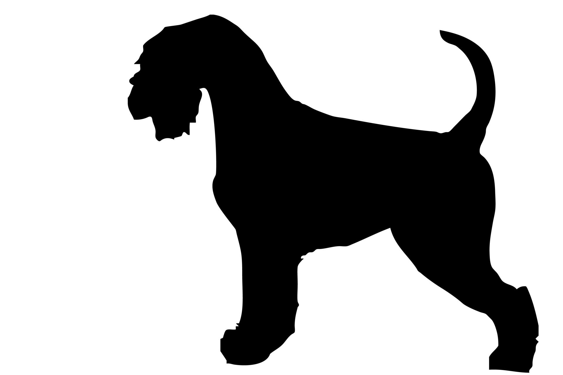 1920x1280 Dog, Schnauzer Black Silhouette Free Stock Photo