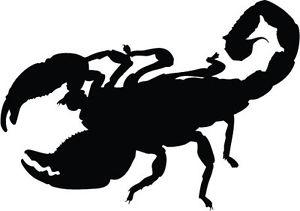 300x211 Scorpion Silhouette Sticker Car Bumper Sticker
