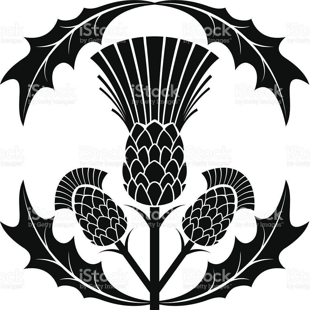 1021x1024 Simple Scottish Thistle Silhouette Vector Illustration Vector