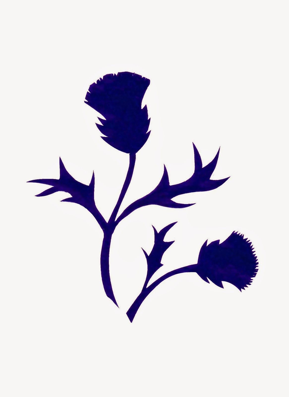 1166x1600 Thistle Silhouette By Sue Small