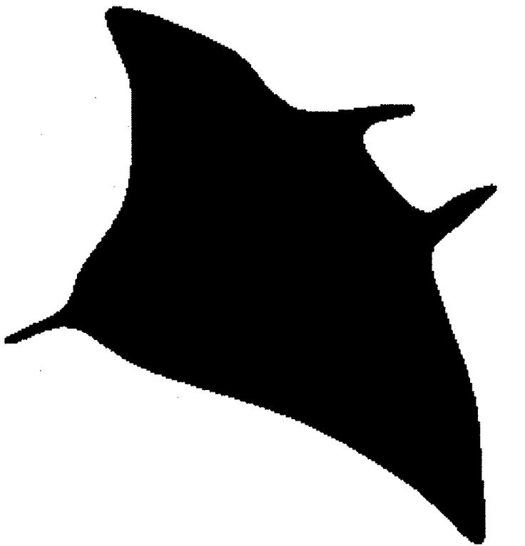 736x766 Clipart Sea Animals Silhouettes Stingray Ocean Life Pencil And