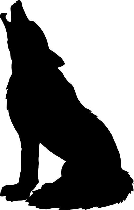 508x798 Sea Lion Clipart Animal Shadow
