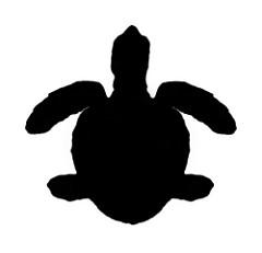 240x231 Silhouette Of Green Sea Turtle (Chelonia Mydas) Turtle
