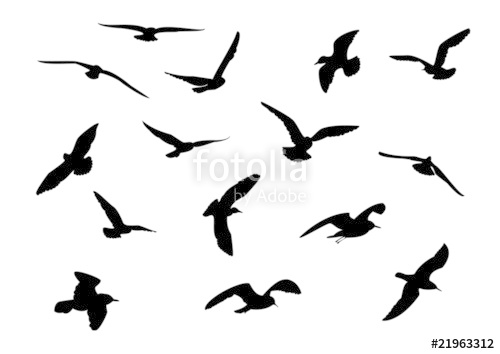 500x354 14 Seagull Silhouette Stock Image And Royalty Free Vector Files