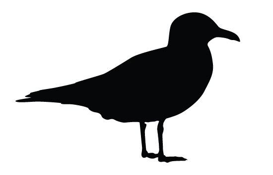 550x354 Image Result For Seagull Silhouette Dremel Vector