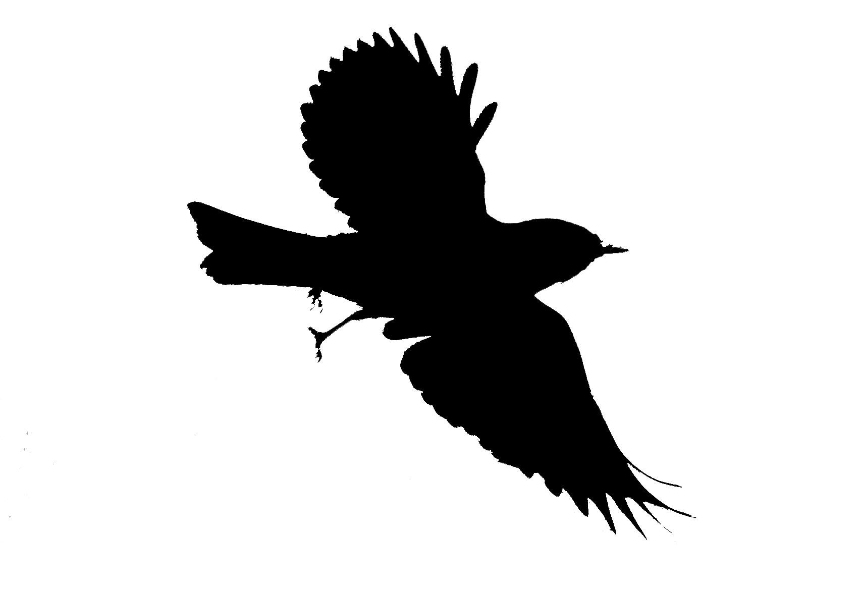 1706x1167 Seagull Silhouette