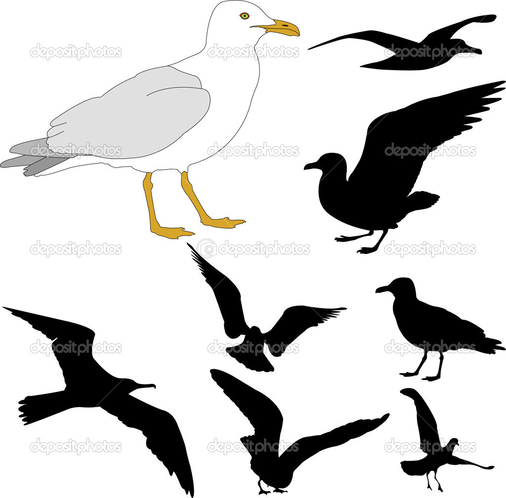 1024x1008 Seagull Silhouette Clipart