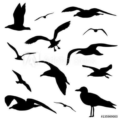 500x500 Seagull Silhouette Set Isolated On White Background Vector