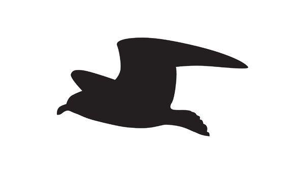 600x343 Seagull Silhouette Silhouette Flying Seagull Adobe Illustrator