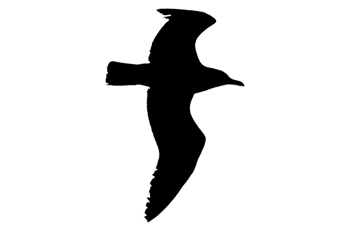 700x467 Seagull Silhouette Sticker We Live To Change