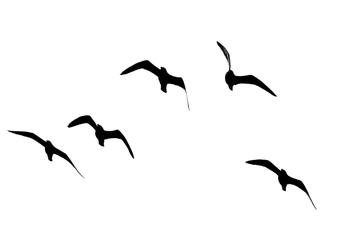 Seagull Silhouette at GetDrawings | Free download