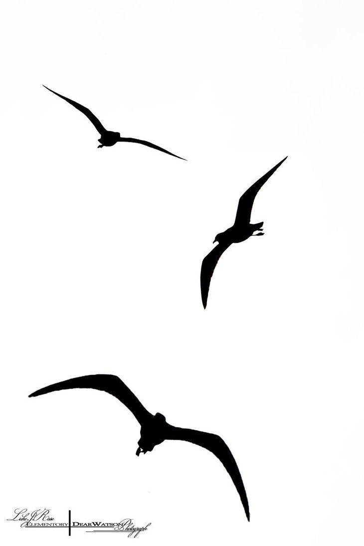 730x1095 Image Result For Bird Silhouette Tattoo Tattoos