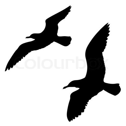 480x480 Seagull Silhouette A Gull Takes To The Wind