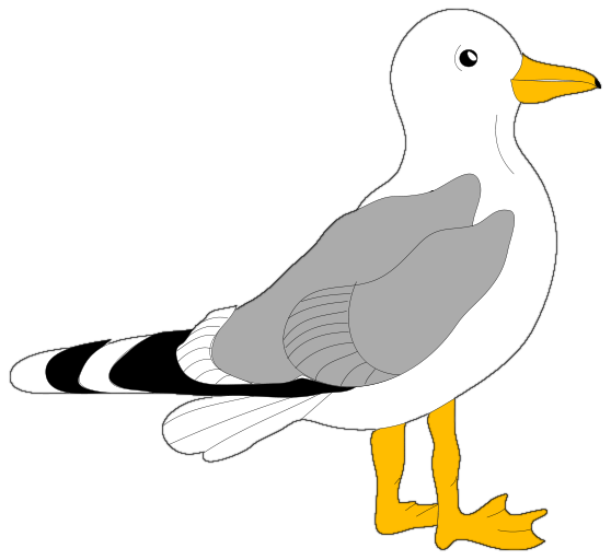 558x512 Image For Gt, Seagull Silhouette Clip Art
