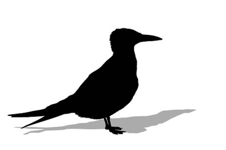 450x300 Seagull Silhouette With Shadow Premium Clipart