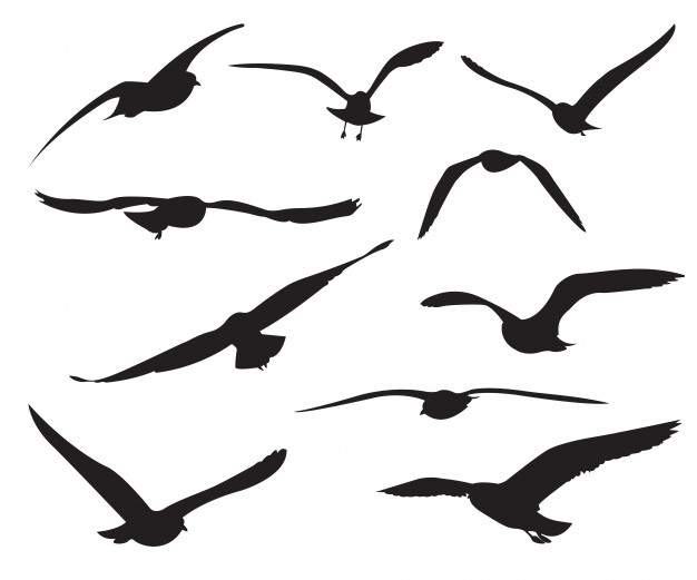 626x521 Seagull Vectors, Photos And Psd Files Free Download