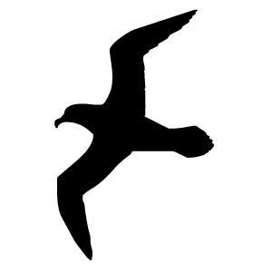 300x300 Black Clipart Seagull 3075651