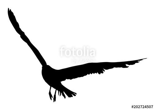 500x356 Seagull Fly Vector Silhouette On White Background, Wings Spread