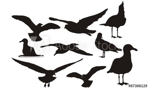500x300 Seagulls Silhouette