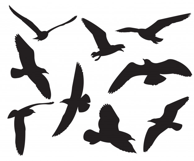 626x521 Gull Vectors, Photos And Psd Files Free Download