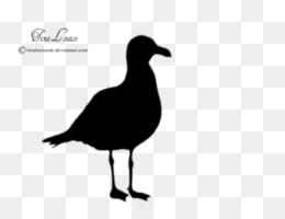 260x200 Gulls Bird Silhouette Clip Art