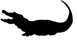 250x132 Crocodile Clipart Shadow Pencil And In Color Alligator Silhouette