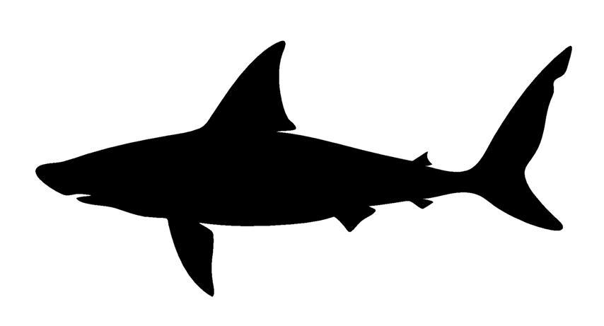 854x461 Shark Silhouette 4 Decal Sticker