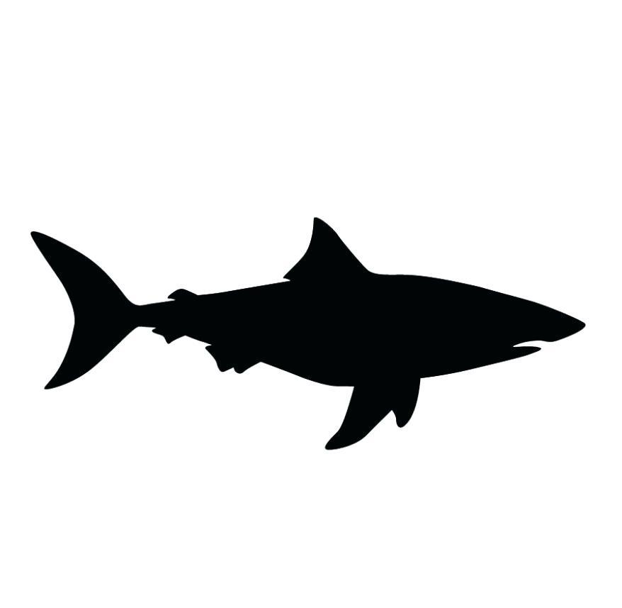 878x857 Scalloped Hammerhead Black Outline Illustration Stock Vector
