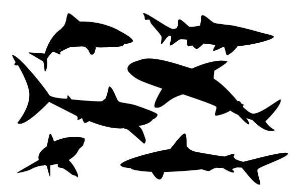 580x380 Shark Vector