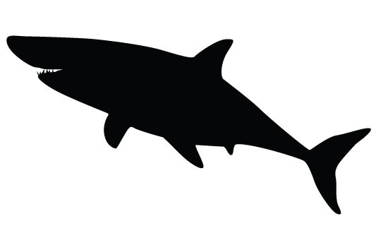 550x354 Shark Silhouette Vectors Vector Free Download, Shark And Silhouettes
