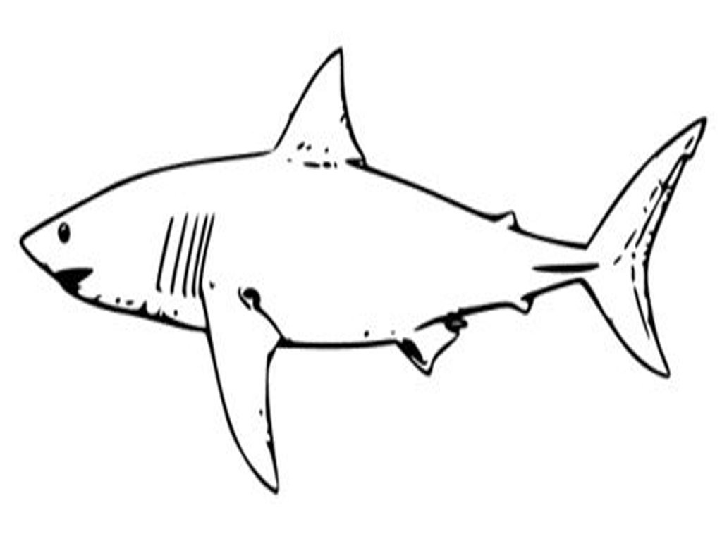 1024x768 Trend Shark Picture For Kids Free Cartoon Clipart Outline And